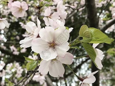 春意盎然,雨后菊花图片