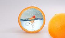 橙子里的金鱼图片