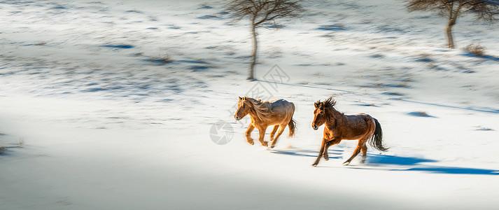 雪地奔马图片