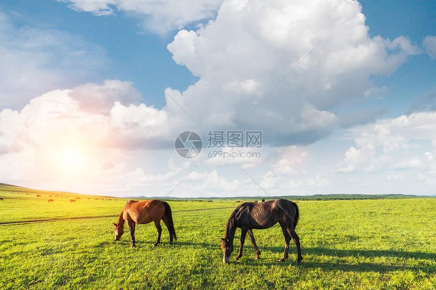 纳帕海的马图片