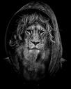 狮子与人结合黑白狮头人身图片