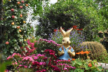花丛中的兔子图片