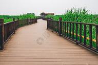德清下渚湖湿地图片
