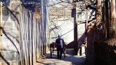 冬日斜阳下的腾冲银杏村图片