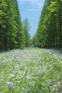 东平森林公园图片