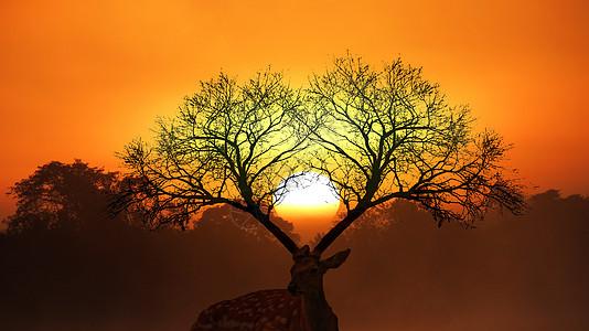 麋鹿森林图片