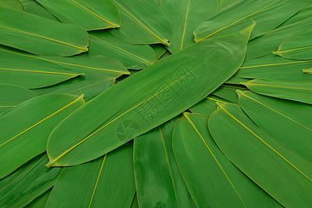 粽子广告端午节图片图片