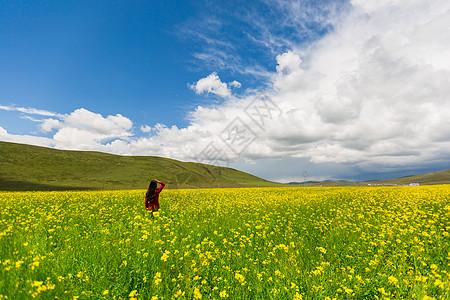 蓝天白云下的油菜花海图片
