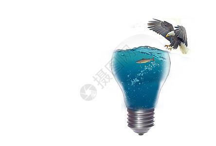 灯泡里的飞鸟和鱼图片