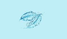 水花叶子图片