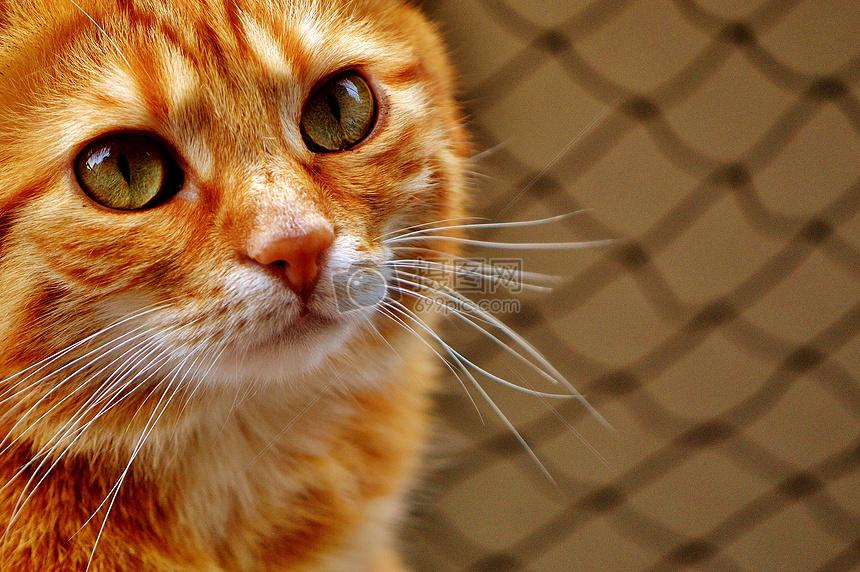 可爱的黄猫摄影图片免费下载_动物图库大全_编号-摄