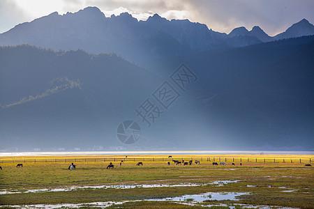 纳帕海草原图片