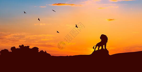 狮子王图片