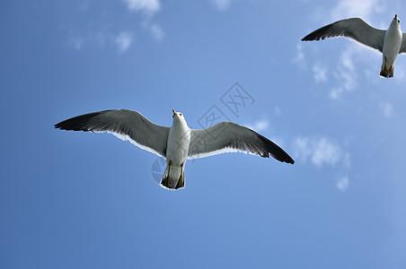 海鸥高清图片