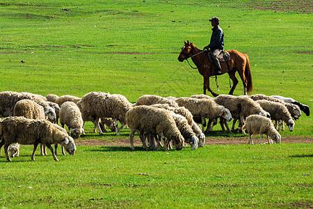 牧羊人图片