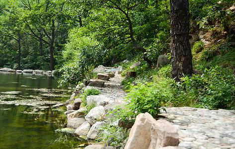 山林,水间小路图片