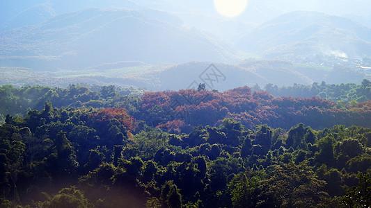 远眺热带风情橡胶林热带雨林图片