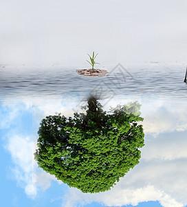 幼苗长成大树图片