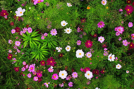花丛花海图片