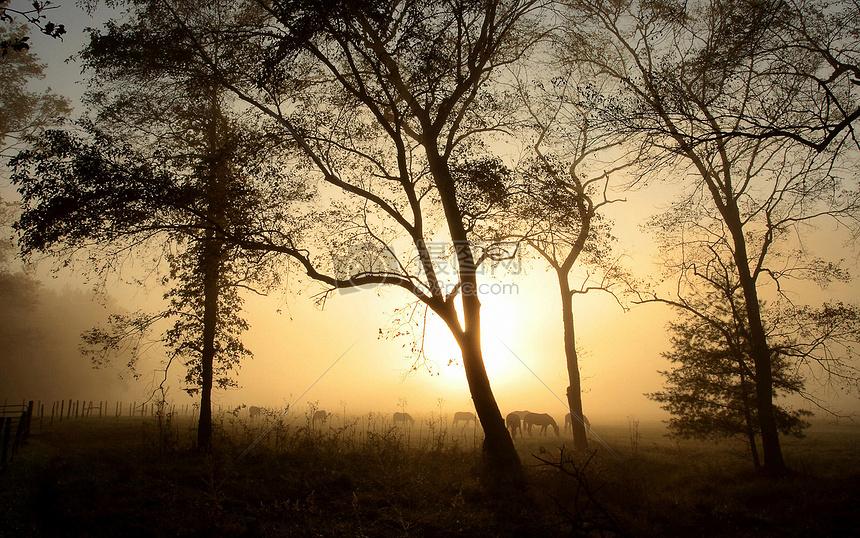 标签: 远方风景黄昏日落意境夕阳小景小树林傍晚傍晚日落小树林的