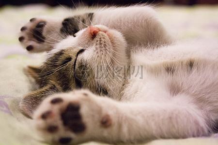 小猫背影图片_小猫背影素材_小猫背影高清图片_摄图网