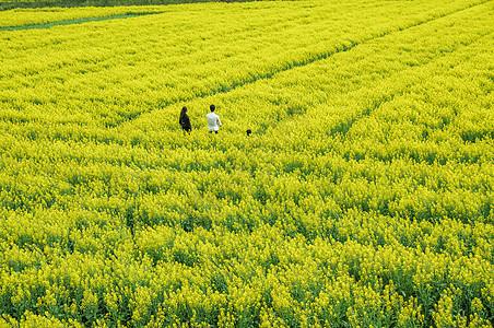 幸福的一家三口在希望的田野上图片