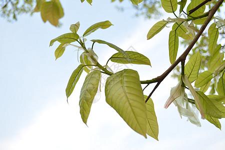 飞舞的树叶图片_飞舞的树叶素材_飞舞的树叶高清图片