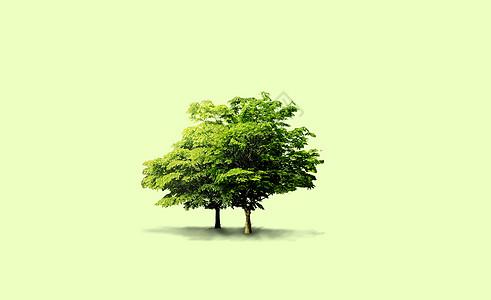 一对树图片