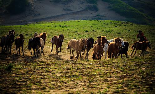 草原上奔腾的马群图片