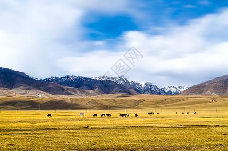 跟我去西藏图片