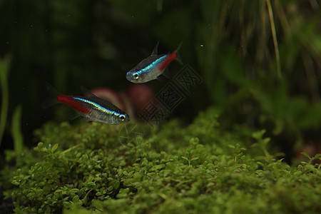 鱼缸里的小鱼图片