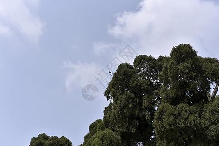 树上一只鸟儿图片
