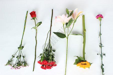 不同品种鲜花单支花材图片
