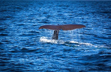 新西兰凯库拉观鲸图片