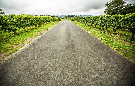 新西兰云雾之湾葡萄庄园里的公路图片