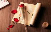 玫瑰花,情人节图片