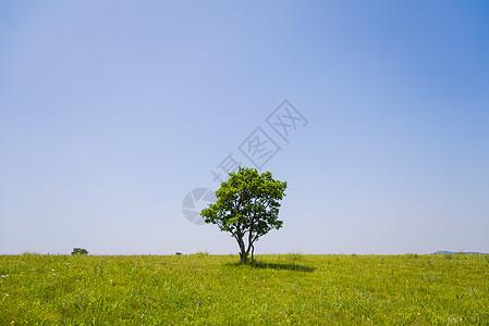 草原和树图片