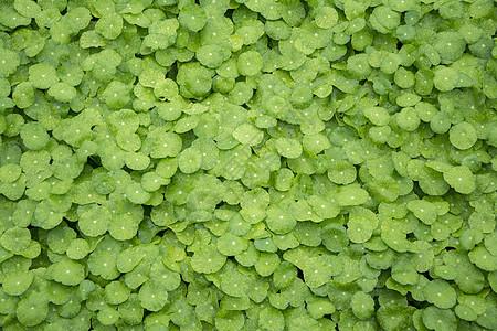 绿色草坪图片