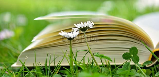 草地的书香图片