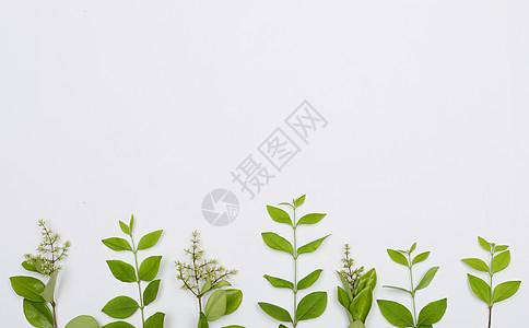 创意绿色树叶图片
