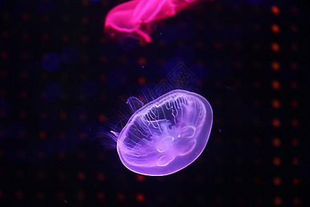 海底世界 海星 海马图片