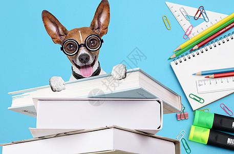 狗狗也爱学习图片