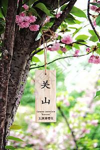 北京玉渊潭公园赏樱花图片