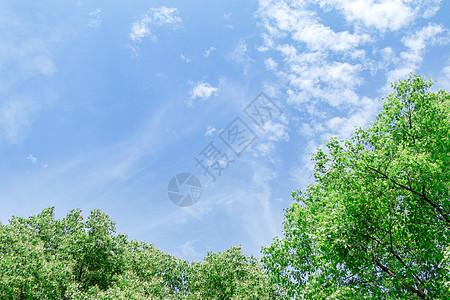 蓝天绿树背景高清图片