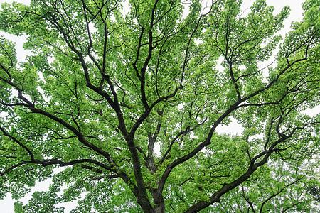 充满生命力枝繁叶茂的大树图片