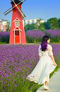 香草园里的美女图片