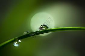 水滴晶莹图片