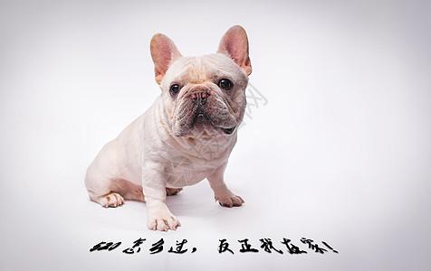 520单身狗图片