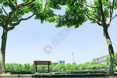 毕业季大学校园林荫道图片