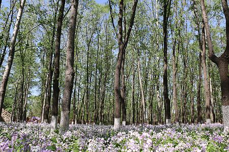 鲜花盛开的树林图片